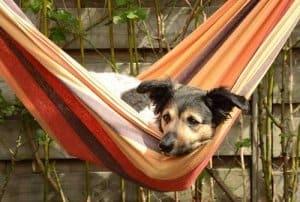 Die Hängematte- für Mensch und Tier perfekt zum Relaxen